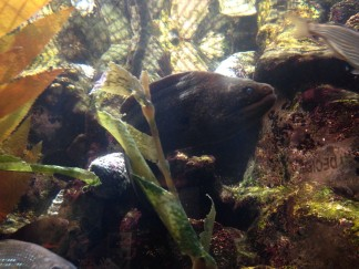 Aquarium am Pier 39 San Francisco